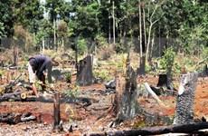 Central Highlands halt licensing forest conversion projects