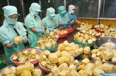 Fruit, vegetable exports hit 1.38 billion USD in five months