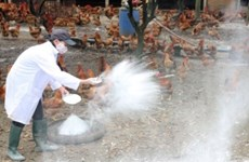 Ministry announces Vietnam free of bird flu