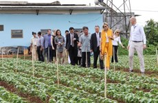 Dutch Queen visits farmers, businesses in Lam Dong