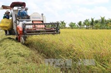 Network formed to create climate resilient rice in Mekong Delta