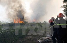 Thanh Hoa prevents forest fires during hot weather