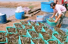 Shrimp, coffee, ginseng added to national products list