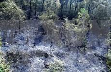 Central Highlands region faces natural forest drop