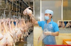 VN seeks to boost livestock product exports