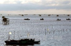 First container of Vietnam's ngao oysters shipped to Italy