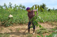 Poverty reduction project improves livelihoods in Kon Tum