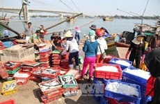 Thua Thien-Hue's fishing output surges after maritime environment incident