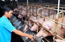 Unprofitable animal farming hurts agricultural production in Dong Nai