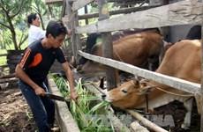 Phu Tho works hard to promote sustainable poverty reduction