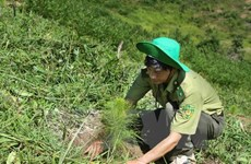 Ca Mau preserves, develops forests