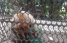 Conservation centre receives pygmy loris