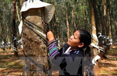 Workshop promotes sustainable rubber planting