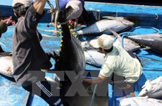 Tuna export revenue surges 21 percent
