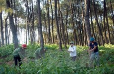 Natural forest development remains unattractive to businesses