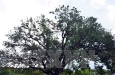 Over 2,600 heritage trees recognised since 2010