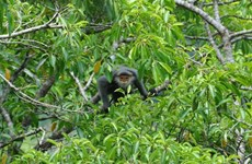 Quang Nam province protects primates from peril