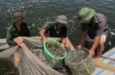 Phu Yen applies high technology in shrimp farming