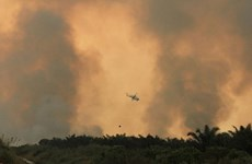 Indonesia works to end forest fires