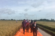 APEC officials interested in Vietnam's rice production, export