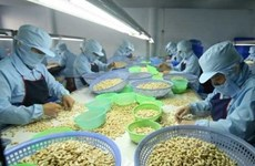 Cashew sector may miss export target