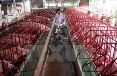 Experts: Production chains vital for pork industry