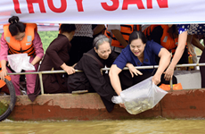 Mass fish release on Lo River on Vu Lan fest