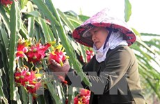 Agricultural sector likely to achieve growth target this year