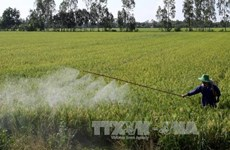 Thua Thien-Hue targets 5,500 hectares of large-scale fields