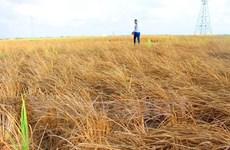 Tra Vinh shares climate change-adapted livelihoods models
