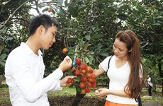Ninh Thuan's orchards opened for visitors