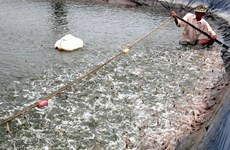 Ca Mau works to promote fishery sector