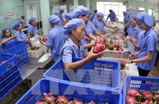 Vietnamese dragon fruit on Australian shelves