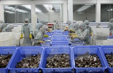 EU becomes Vietnam's top shrimp importer