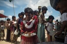 Myanmar, Bangladesh coordinate to repatriate Rohingya