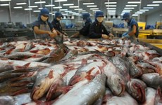 Price of material tra fish surges