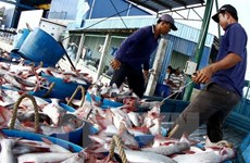 VASEP: No year-end surge in tra fish, shrimp exports to US