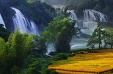 Festival in honour of Vietnam's widest waterfall