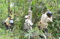 Vietnam collects nearly 1.1 trillion VND in forest environment fees