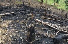 Forests destroyed in northern Dien Bien province