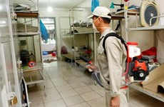 Dengue cases in Hanoi decrease