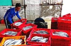 Tien Giang's fishermen enjoy bumper catch