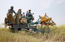 Thailand strengthens agricultural supply chain