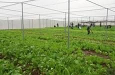 Hanoi promotes hi-tech agricultural development
