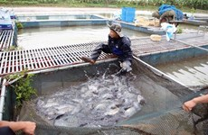 Can Tho, Brazil's Maranhao state partner in aquaculture