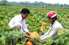 Agro-forestry-fishery exports to hit nearly 30 bln USD in 10 months