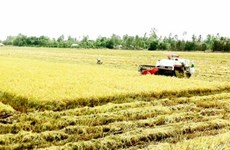 Vietnam uses remote sensing to monitor rice production