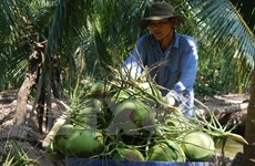 Mekong Connect 2017 seeks to increase value of local products