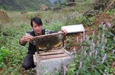 Ha Giang seeks solutions to sustainable beekeeping development
