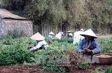 Climate change adaptation project fruitful in Tra Vinh